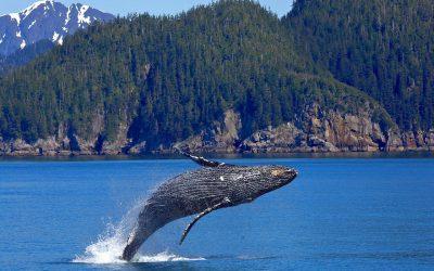 Begeleide cruisetours Alaska 2021