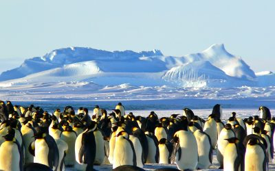 Expeditie Antarctica Seabourn & OceanWide Expeditions