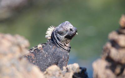 Expeditiecruise Galapagos Eilanden – Silversea
