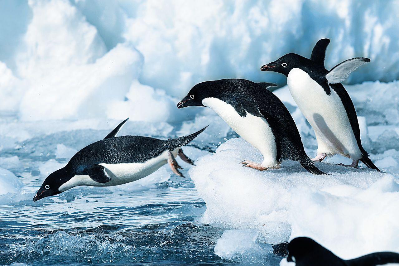 Antarctica-pinguins